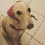Doggiedog